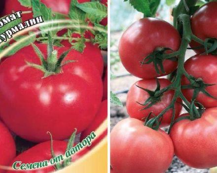 Descrierea soiului de tomate Tourmaline, caracteristicile și randamentul acestuia
