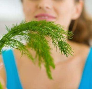 Korisna i ljekovita svojstva sjemenki kopra, moguće kontraindikacije za zdravlje ljudskog tijela