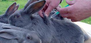 Reglas para vacunar conejos en casa y cuando vacunar.