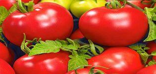 Descripción de la variedad de tomate Bolivar F1, sus características y rendimiento