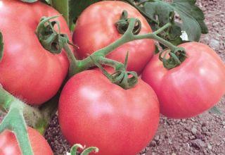 Caracteristicile și descrierea soiului de tomate Raspberry Viscount, randamentul său