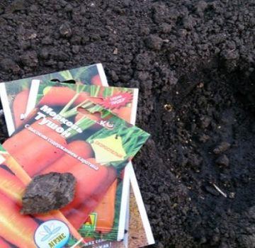 Comment planter correctement des carottes avec des graines en plein champ