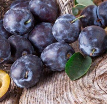 De ce prunele au viermi în fructele lor și cum pot fi procesate