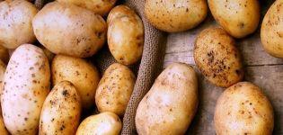 Descripción de la variedad de patata Timo, sus características y rendimiento.