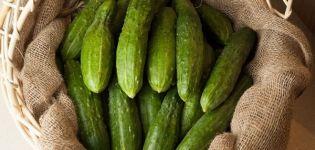 A Relé fajta uborka leírása, termesztése és hozama