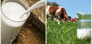 Miért csökkent a tehéntejhozam, és mi okozta a tej hirtelen csökkenését, mit tegyek?