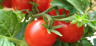 Descripción de la variedad de tomate Alice, características de cultivo y cuidado.