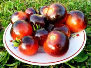 Productividad, características y descripción de la variedad de tomate arándano