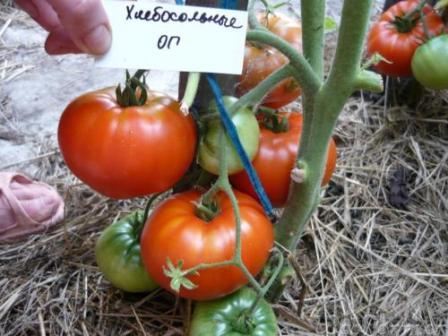 tomate hospitalario