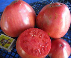 Características y descripción de la variedad de tomate Sevruga o Pudovik, su rendimiento