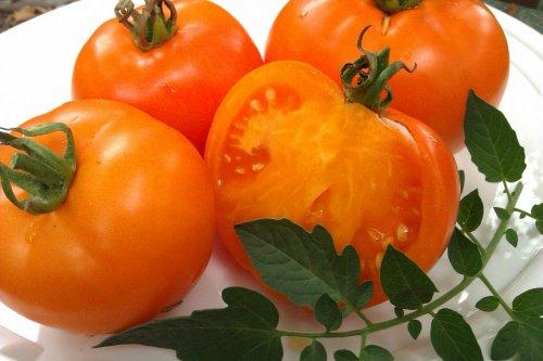 elefante naranja tomate en un plato