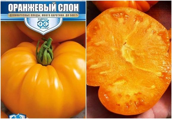 variedades de tomate elefante naranja