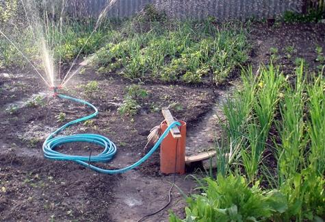 udarea grădinii