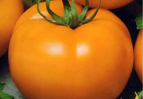 vzhľad medu z paradajok