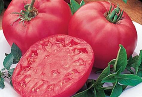 vzhľad paradajok Hovädzie ružové brandy