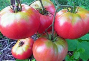 Opis sorte i značajki uzgoja rajčice Supergiant pink f1