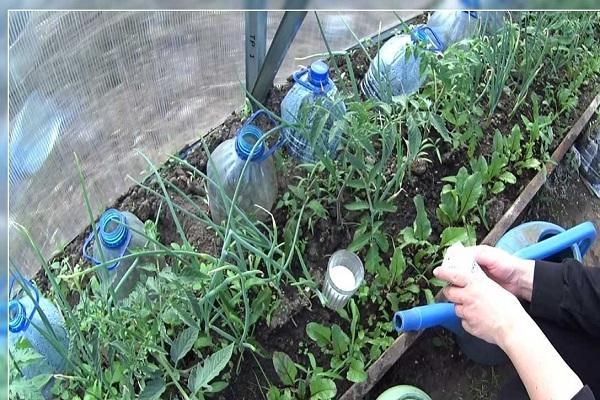 fertilizante en un vaso