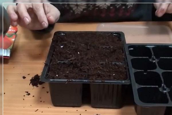 plantar sin plántulas