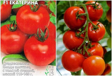paradajkové semená Ekaterina