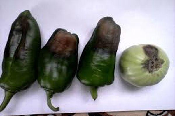enfermedad de la pimienta