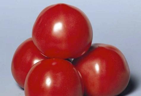 vzhľad paradajok Ružový roztok
