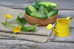 Días favorables para plantar pepinos según el calendario lunar en mayo de 2020.