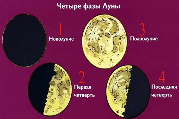 vier fasen