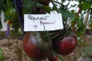 Descrierea soiului de roșii negre, randament și cultivare