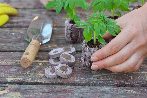 plantarea padelelor