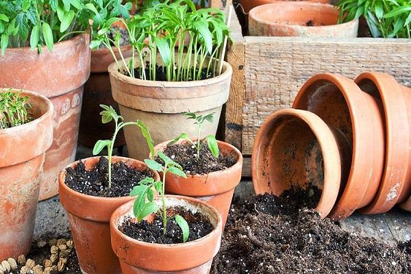 ghivece de plante