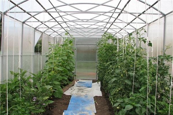 co-cultivo