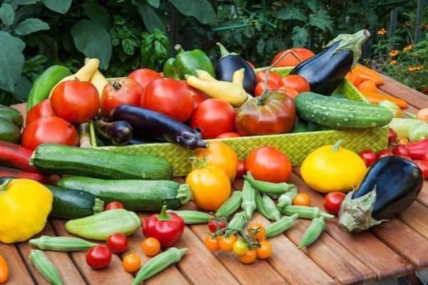 estofado de vegetales
