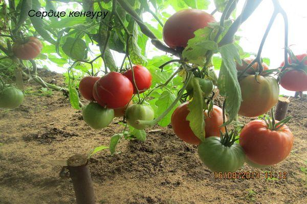 inima de cangur cu tomate