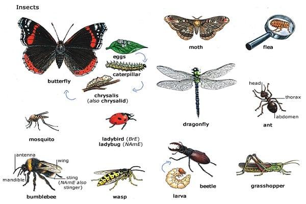 druhy škodcov