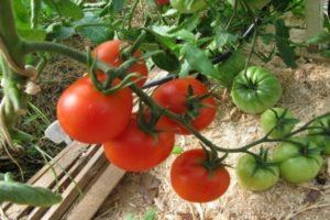 Descripción de la variedad de tomate Biathlon F1, sus características y cultivo