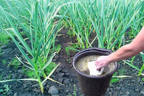 hrănirea organică