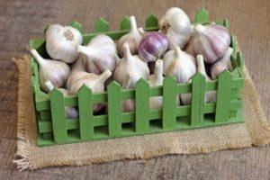 Când să recoltezi usturoiul într-o vară ploioasă pentru a-l salva de putregai?