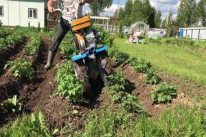 Cum să se curățească rapid și corect cartofii cu un tuns, tractor de mers pe jos și alte dispozitive?