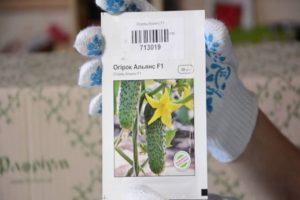 Descripción de la variedad de pepino Alliance, recomendaciones de cultivo y cuidado.