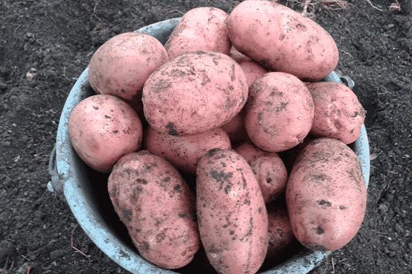 καλλιέργεια λαχανικών