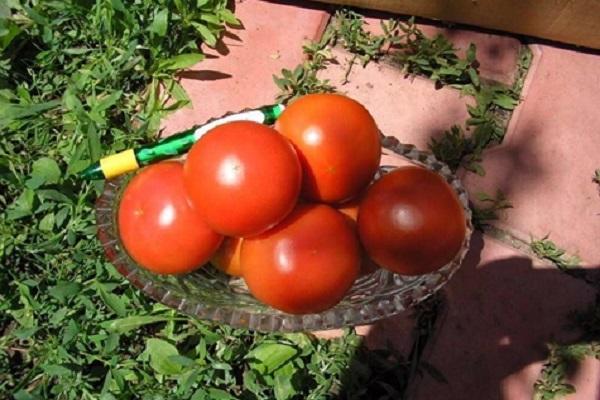 Tomate Maxim