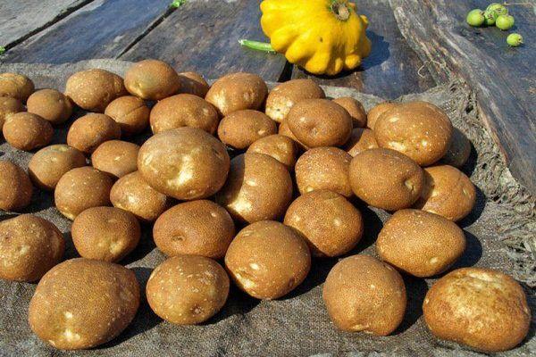 zemiakové hľuzy