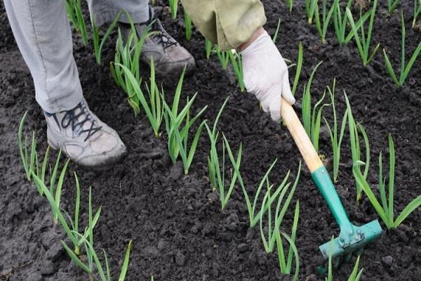 se pregătește solul