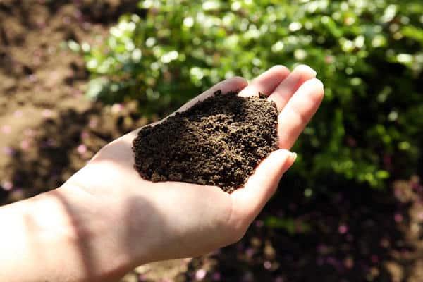 solul în mână