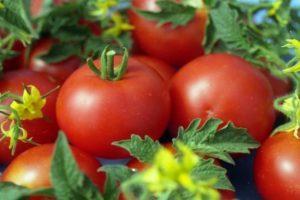 A Sytyaga paradicsomfajta leírása, jellemzői és termése