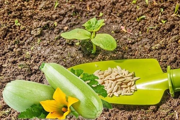 sembrando semillas