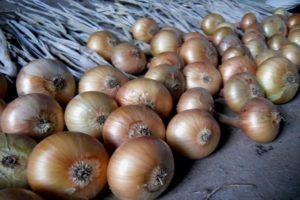 Hagyma termesztése, gondozása és etetése a réten a szabadban