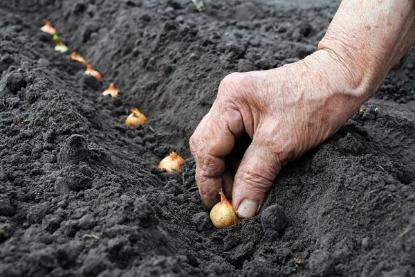 termesztés agrotechnológiája