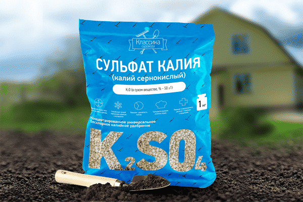 formación de cultivos de raíces
