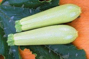 Descripción de la variedad de calabacín Iskander f1, características de cultivo y rendimiento.
